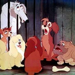 犬種 わんわん物語 実写 【実写版『わんわん物語』】レディ&トランプは本物の犬!アメリカン・コッカー・スパニエルの種類についても詳しく。